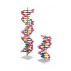 MOLÉCULES D'ADN B POUR ÉLÈVES
