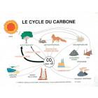 PLANCHE : LE CYCLE DU CARBONE
