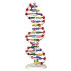 MODÈLE ADN 16 PAIRES DE BASES