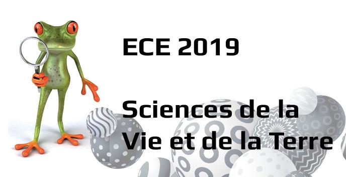 ECE 2019 SVT